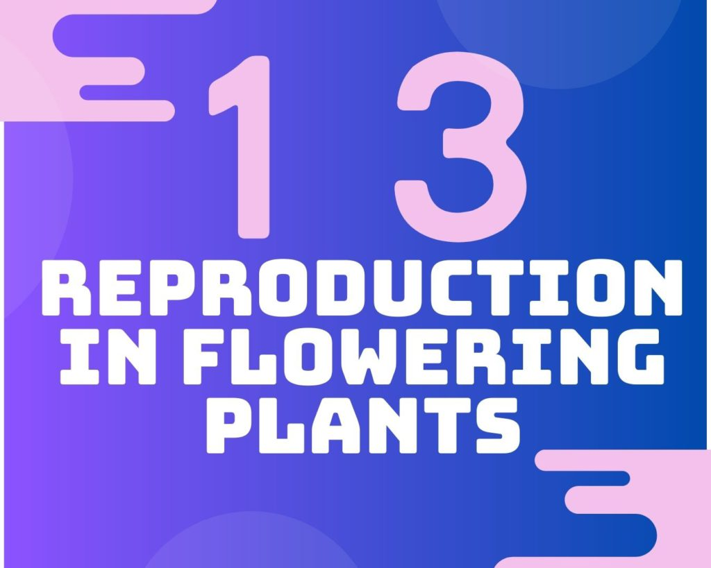 13 Reproduction in flowering plants