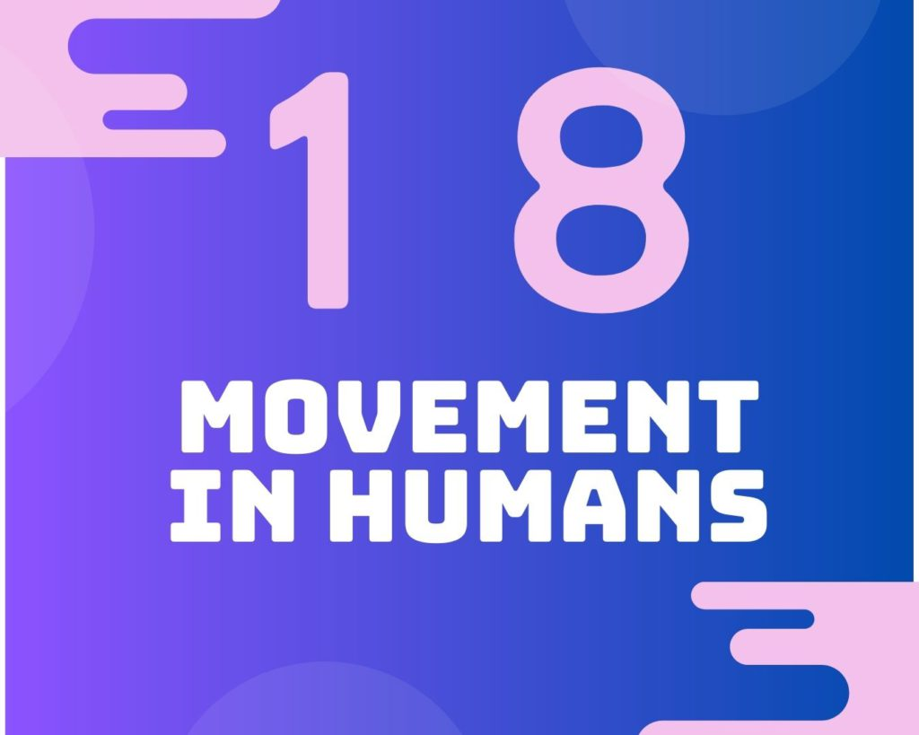18 Movement in humans