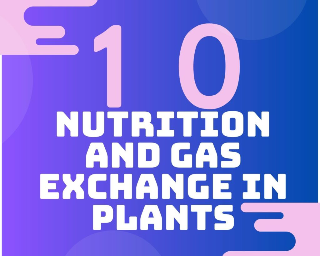 10 Nutrition and gas exchange in plants