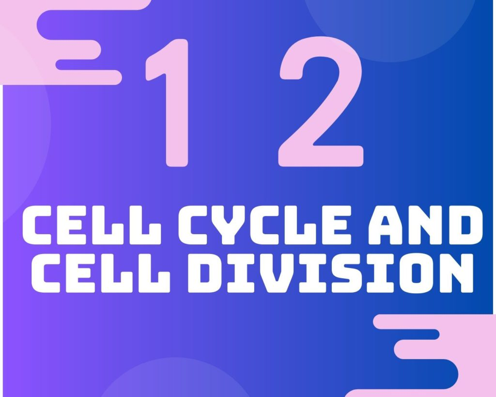 12 The cell cycle and cell division