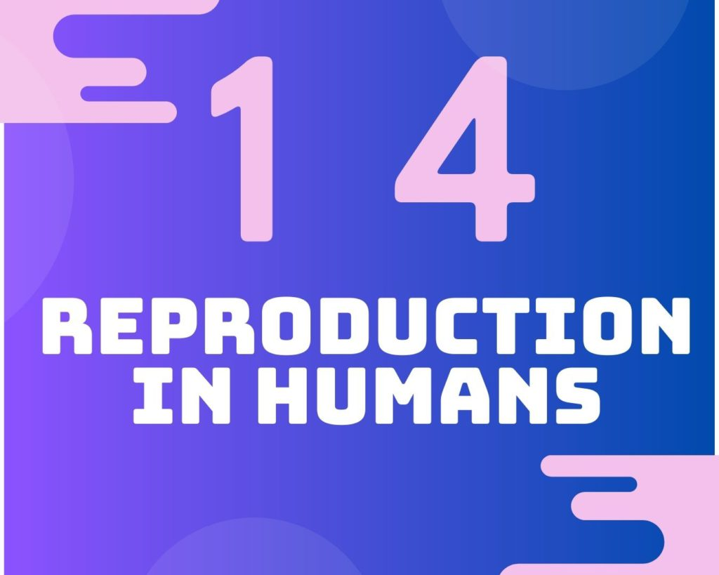 14 Reproduction in humans