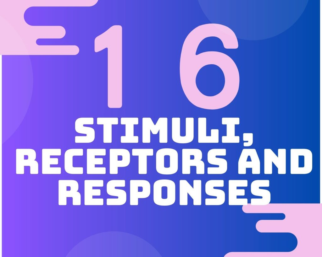 16 Stimuli, receptors and responses