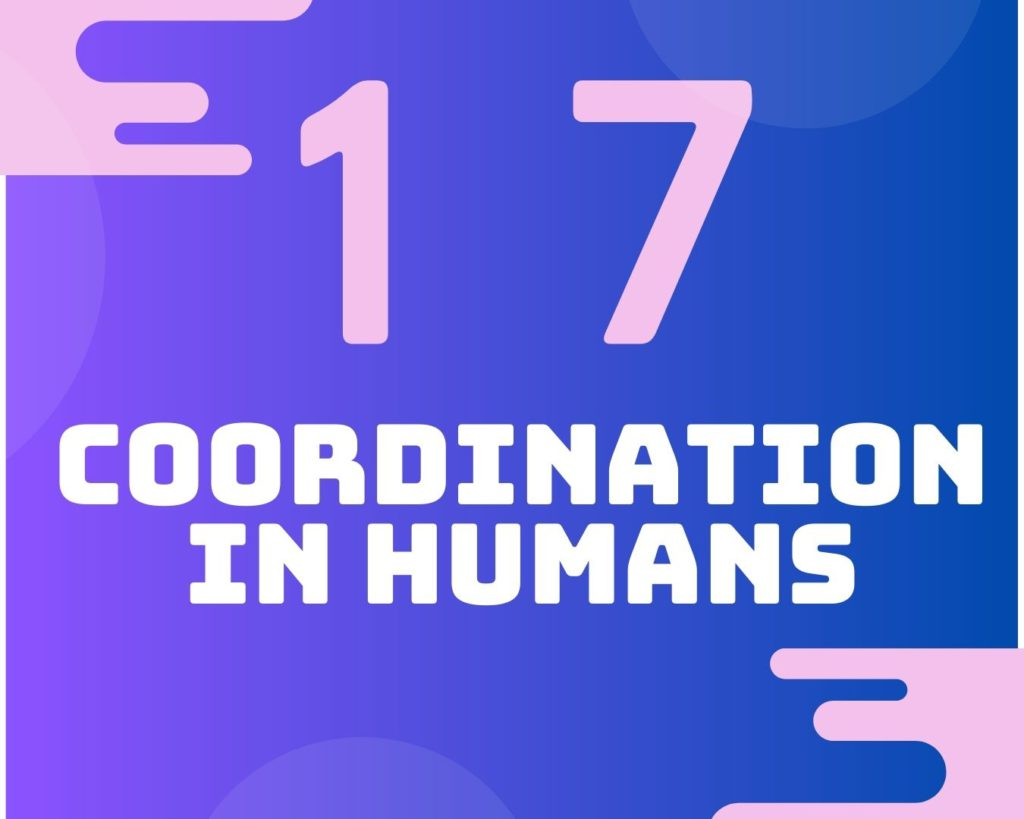17 Coordination in humans