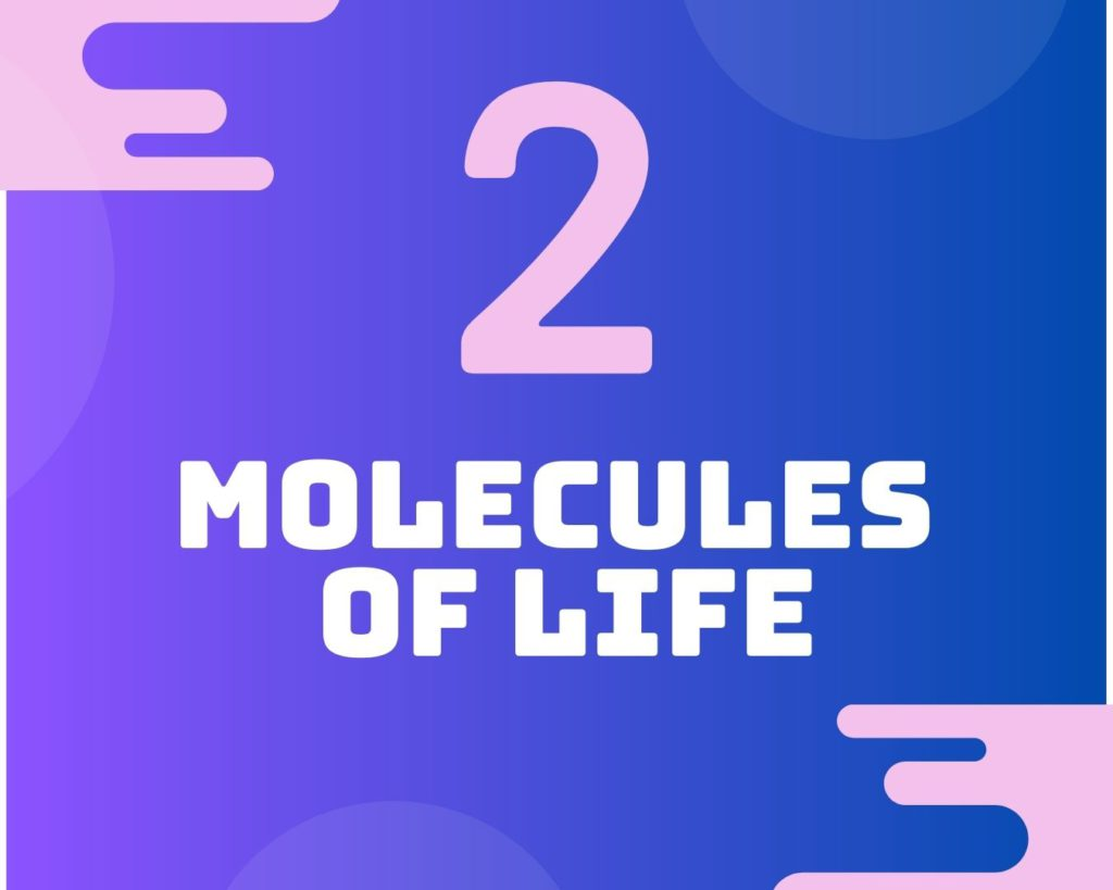 2 Molecules of life