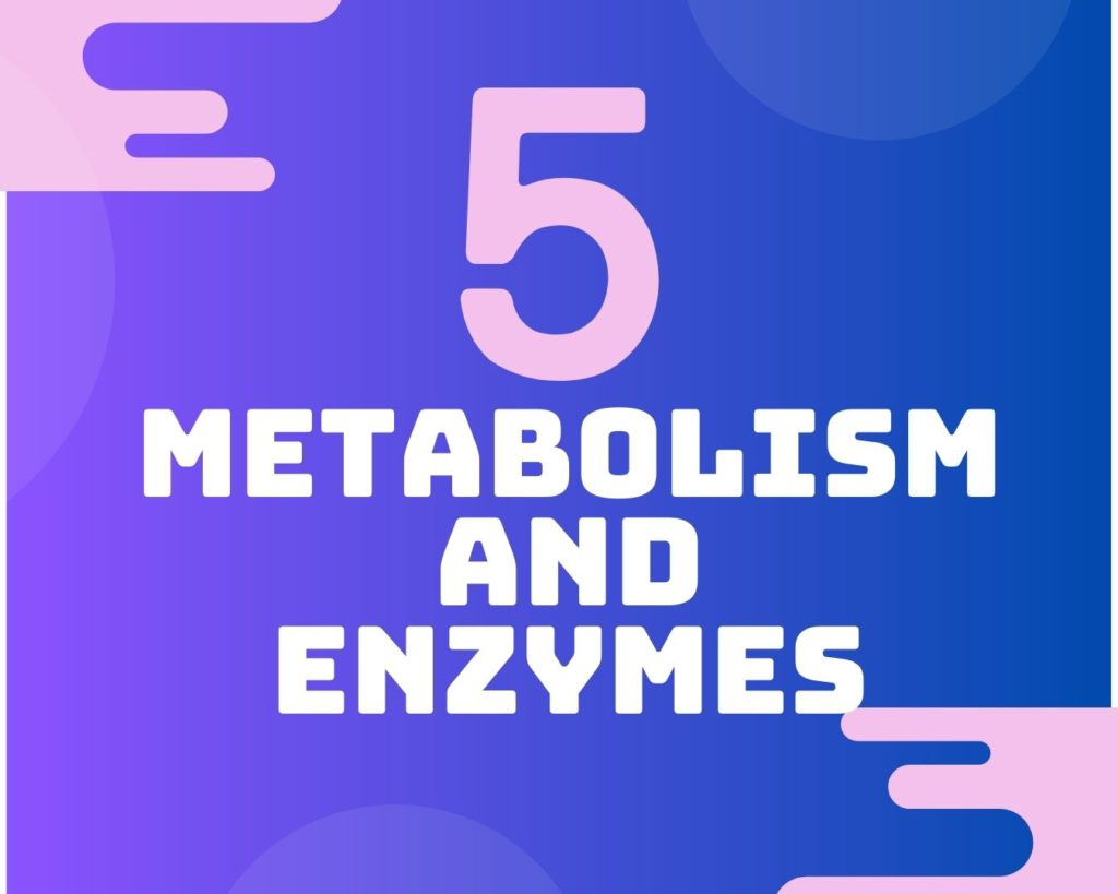 5 Metabolism and enzymes