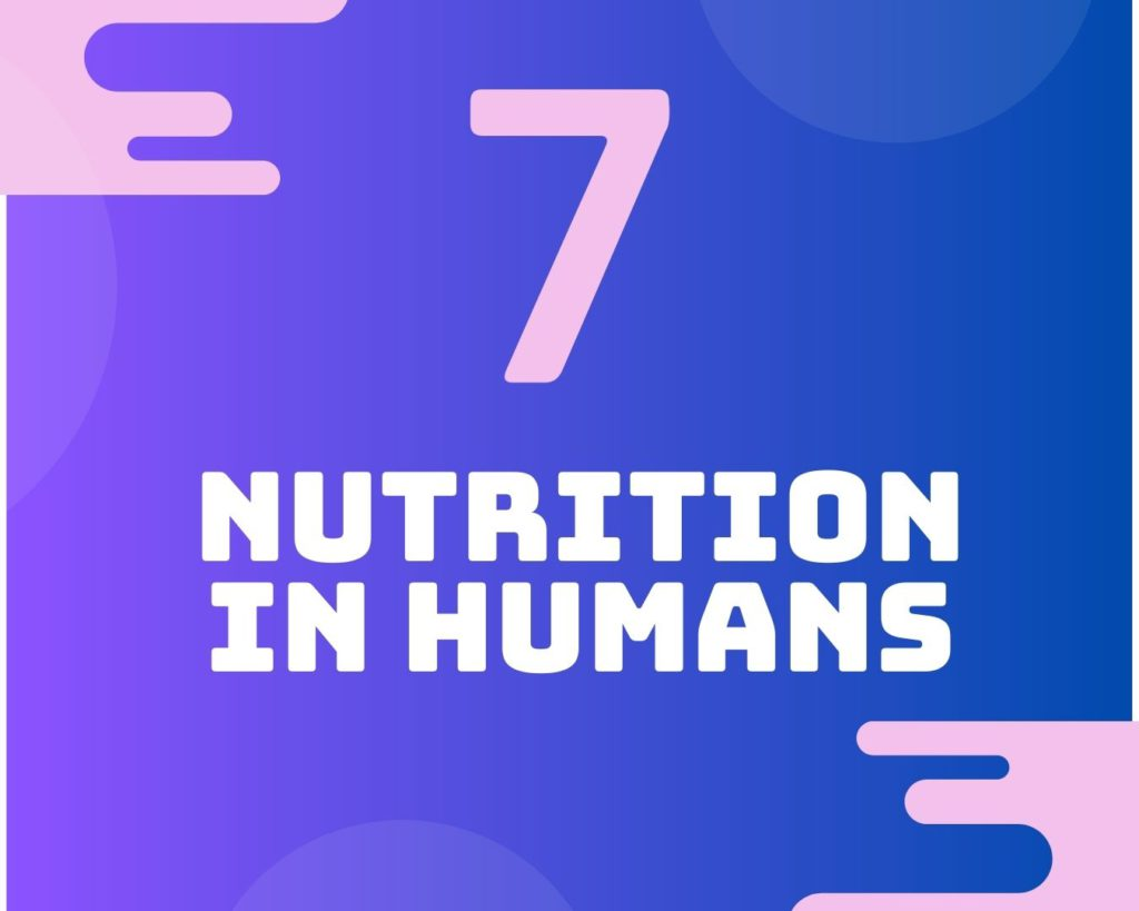 7 Nutrition in humans