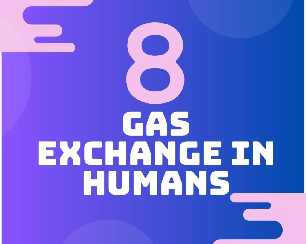 8 Gas exchange in humans